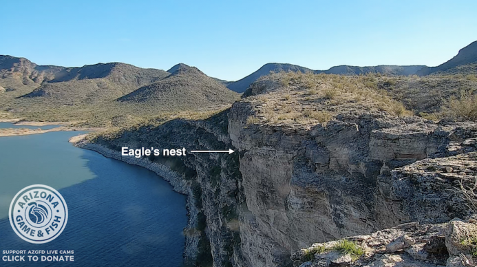 Eagle's Nest on Side of Rock Cliff - HDOnTap.com