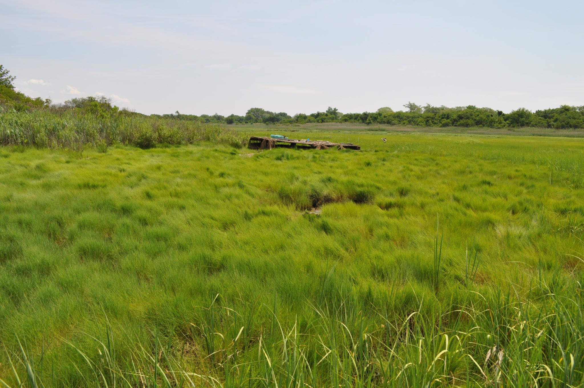 Salt marsh in Brooklyn